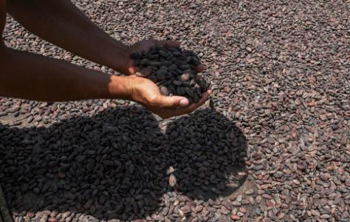 Côte d'Ivoire/Cacao:1ere réunion sur le commerce équitable en octobre
