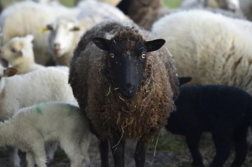Alerte à la fièvre charbonneuse — Hautes-Alpes