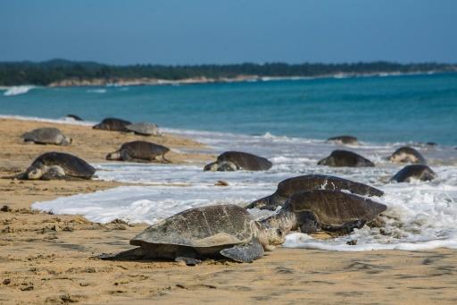 Deux Allemands arrêtés en Espagne pour trafic de tortues