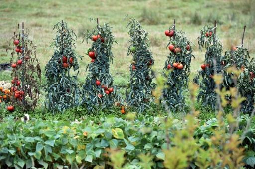 Manifestation d'agriculteurs et distribution de tomates près de Saint-Brieuc