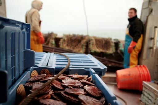 Tensions entre pêcheurs français et britanniques autour de la coquille Saint-Jacques