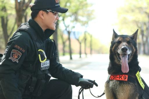 Corée du Sud: cérémonie d'hommage à un chien policier mort en service