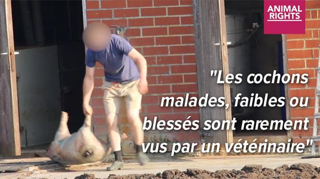 Un homme traîne des cochons morts hors d'une étable flamande: