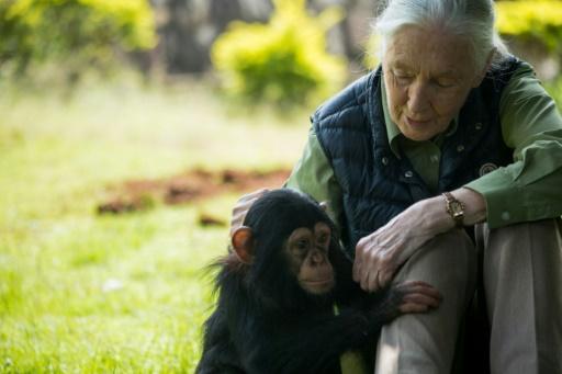Environnement: Jane Goodall et Edgar Morin appellent au