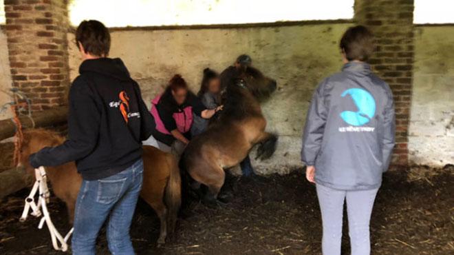 La procès de la comtesse du Monceau de Bergendal, dont les chevaux s'était retrouvés dans les rue de Villeroux, a commencé aujourd'hui