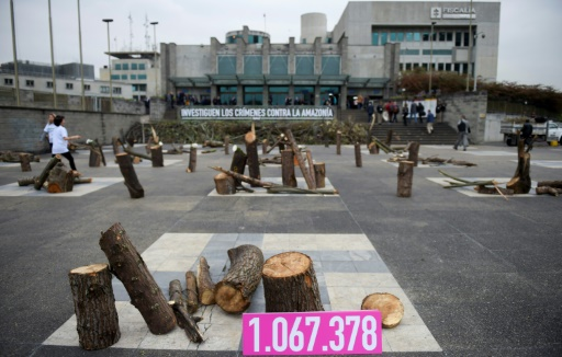 Un cimetière d'arbres en plein Bogota contre la déforestation de l'Amazonie
