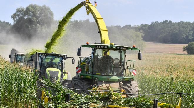 L'agriculture subit les effets du réchauffement climatique: les chercheurs tentent de développer des variétés de céréales plus résistantes