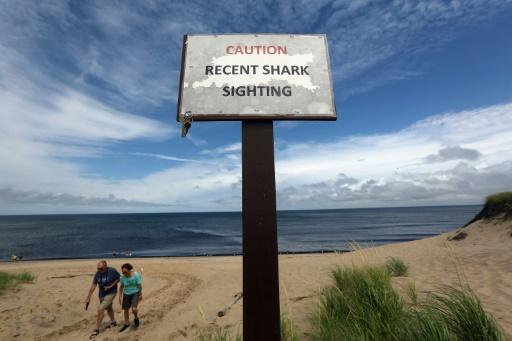 USA: rare attaque mortelle de requin dans le nord-est