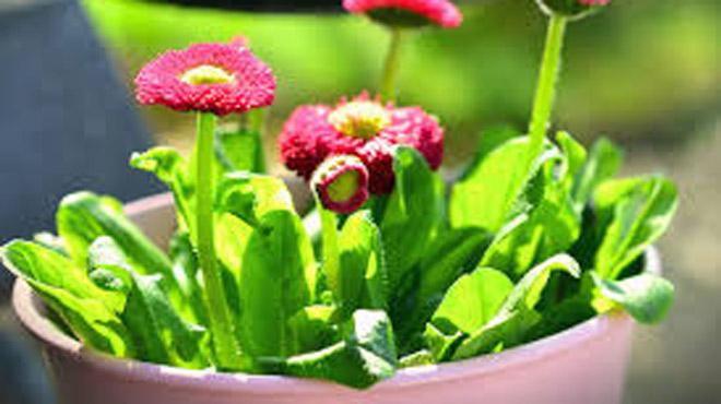 Les couches pour bébé recyclées en pots de fleurs aux Pays-Bas: