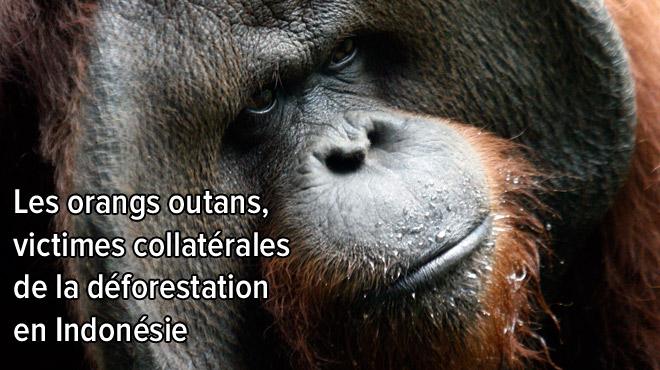 Greenpeace dénonce: les compagnies Unilever, Nestlé, Colgate-Palmolive ou L'Oréal MENTENT et continuent à détruire la forêt
