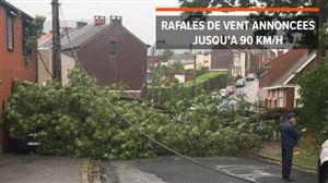 """Le vent fait des dégâts dans le Hainaut: """"Un arbre a chuté alors que je venais de passer dans la rue avec mon fils!"""""""