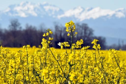Pyrénées: hausse des températures maximales entre 1 et 7 degrés à la fin du siècle