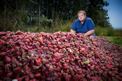 Un peu de douceur dans la crise des fraises australiennes sabotées
