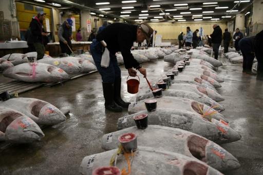 Japon: manifestation contre le déménagement du marché aux poissons