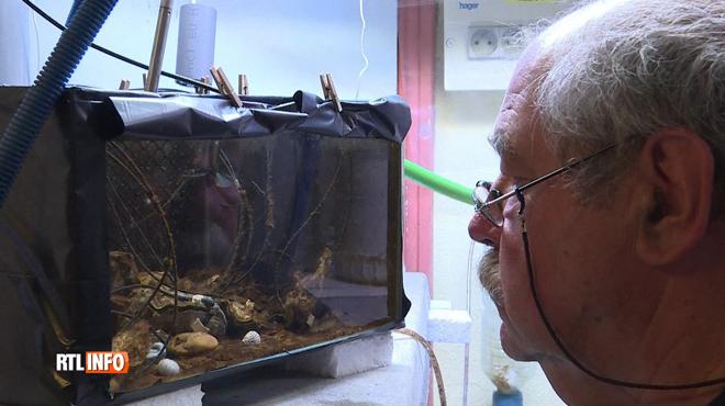 Des huîtres pour lutter contre la pollution marine: