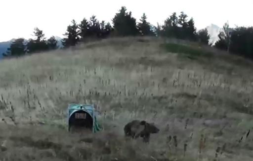 Pyrénées: des anti-ours dans la montagne pour les