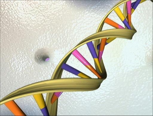 Un gène responsable de la dysfonction érectile identifié par des chercheurs