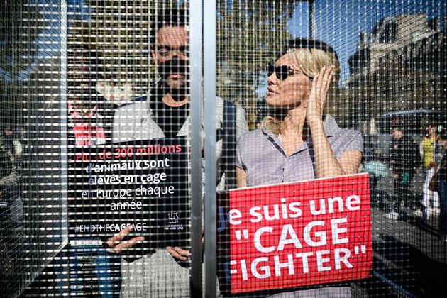 Pamela Anderson en cage pour dénoncer les souffrances animales