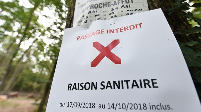Peste porcine: la Wallonie octroiera une aide exceptionnelle aux éleveurs