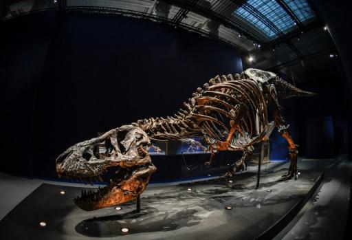 Carton plein pour le T. rex à Paris, avec 340.000 visiteurs