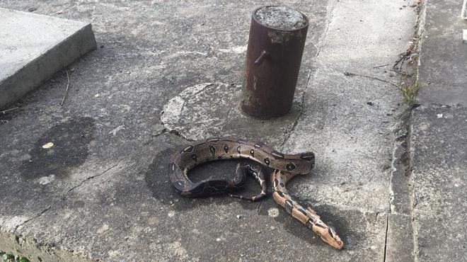 Thuin: un serpent