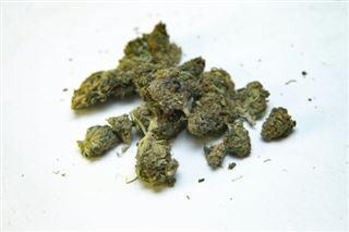 Première étape vers l'autorisation du cannabis thérapeutique en France