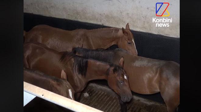 Le monde des courses de chevaux interpellé après une vidéo d'une association sur un abattoir