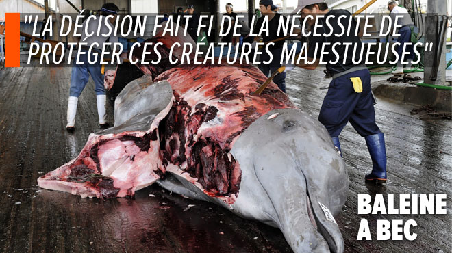 Le Japon décide de reprendre la chasse commerciale à la baleine