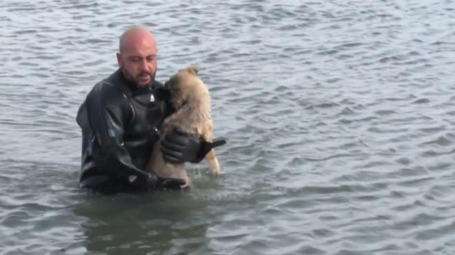 Un chiot pris au piège sur un lac gelé est sauvé de justesse par un policier en Turquie