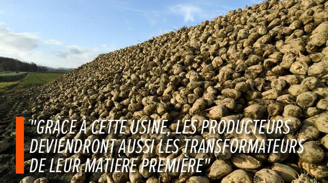 Bientôt une sucrerie coopérative à Seneffe? 1800 agriculteurs wallons et flamands sont sur le coup