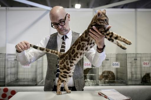 Chiens, chats, serpents... 5.000 animaux au salon