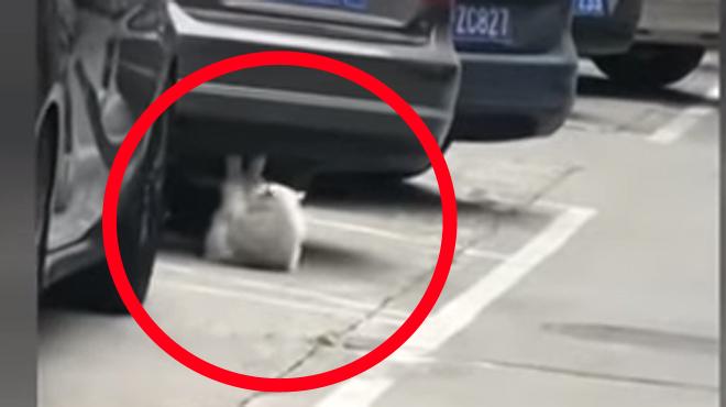 Aperçu sur un parking: ce chat