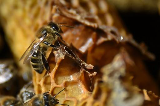 Une école d'apiculture lancée par Arnaud Montebourg ouvre ses portes à Dijon