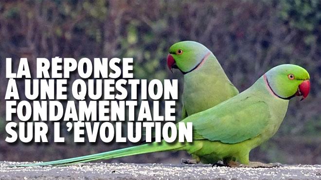 Cette expérience montre que les perruches femelles ne sont pas attirées QUE par le plumage ou le chant des mâles