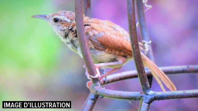 Il capturait les oiseaux avec de la glu: près de 2.000 pièges à oiseaux découverts chez un braconnier en France