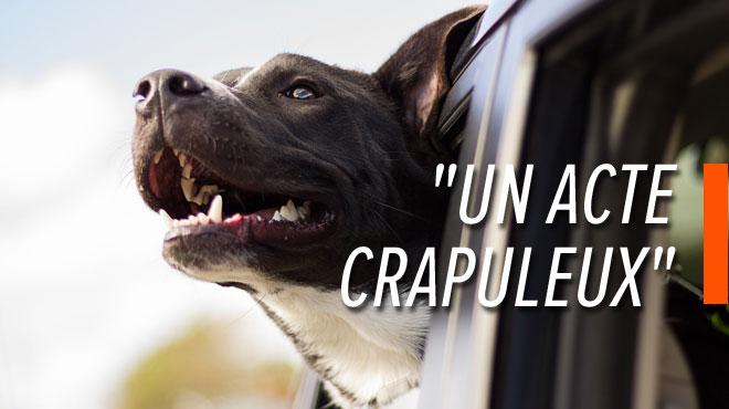 Enervé par le chien de son voisin à Genappe, il le vole et l'abandonne à l'étranger: l'animal n'a jamais été retrouvé