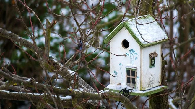 Les oiseaux semblent déserter les mangeoires cette année: il y a plusieurs causes possibles