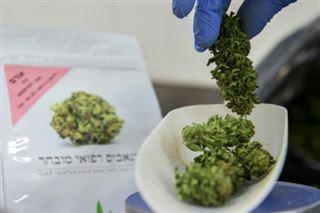 Israël- feu vert définitif à l'exportation de cannabis à usage médical