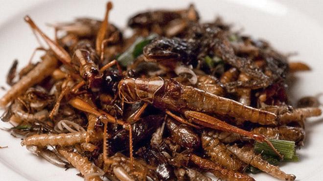 Insectes dans l'alimentation: ça ne décolle pas en Belgique