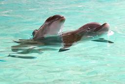 Polémique autour de séances photos avec des dauphins proposées par le Boudewijn Seapark