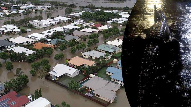 Des crocodiles envahissent les rues en Australie en raison d'inondations exceptionnelles: