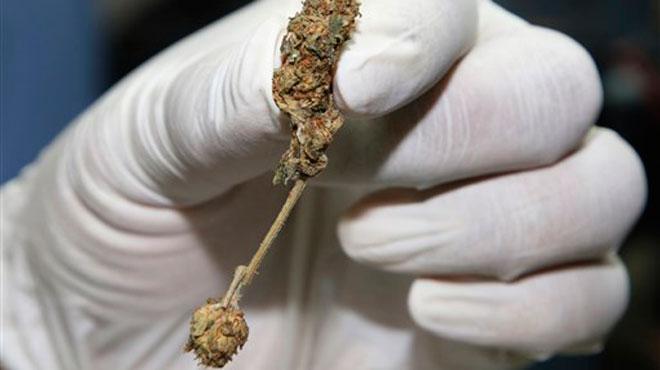 Est-ce une drogue ou un médicament miracle? La consommation du kratom inquiète aux Etats-Unis