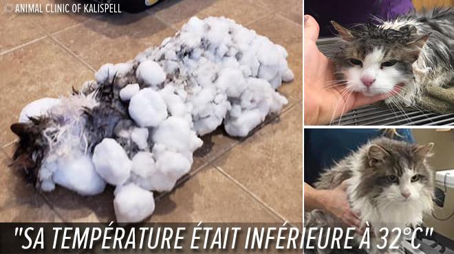 Un chat, enseveli sous la neige, a dû être DÉCONGELÉ: contre toute attente, Fluffy a survécu