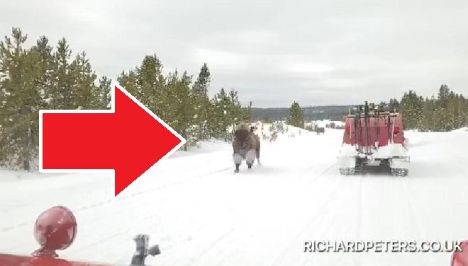 Tout à coup, ce bison CHARGE à toute allure leur véhicule (vidéo)