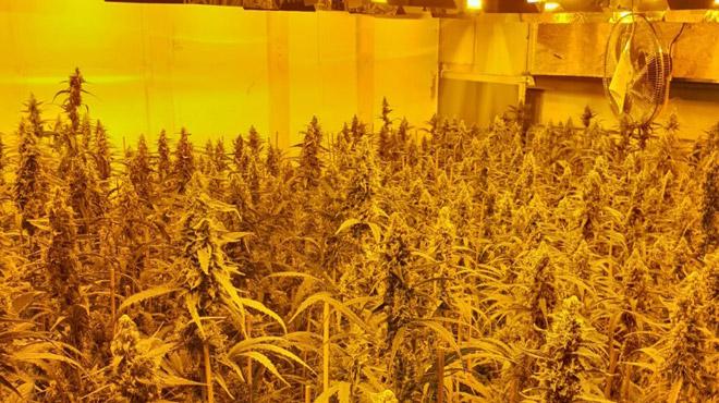 1800 plants de cannabis découverts dans un entrepôt à Schaerbeek (photo)