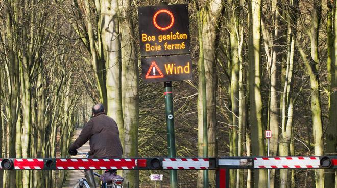 Météo: de fortes rafales ce week-end, tous les parcs bruxellois fermés