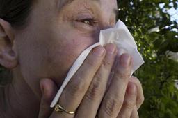 Début de la saison du pollen, avec un premier pic dû à l'aulne et au noisetier