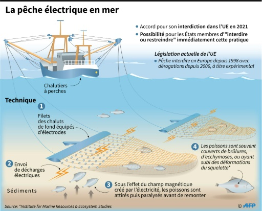 La France va anticiper l'interdiction de la pêche électrique dans ses eaux territoriales