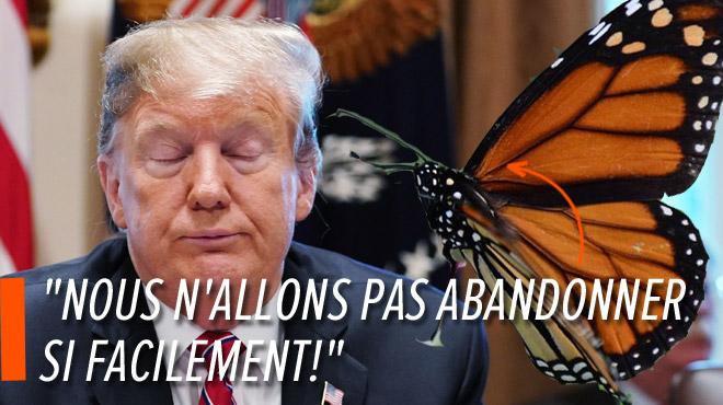 Des défenseurs des papillons déboutés dans leur bataille contre le mur de Trump
