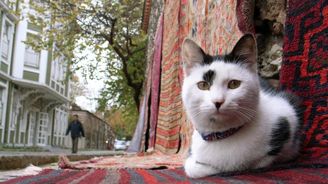 À Istanbul, les animaux de rue occupent une place essentielle: